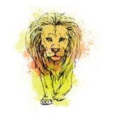 Schizzo di vettore dalla penna di una testa del leone su un fondo del colorato di Fotografia Stock