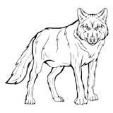 Schizzo di vettore di un lupo Fotografia Stock Libera da Diritti