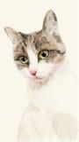 Schizzo disegnato a mano dell'acquerello del gatto Fotografie Stock