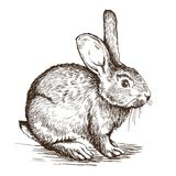 Schizzo disegnato a mano di coniglio Fotografia Stock