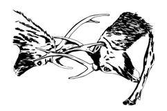 Schizzo disegnato a mano di un combattimento dei cervi Fotografia Stock Libera da Diritti
