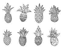 Schizzo disegnato a mano di vettore dell'illustrazione dell'ananas su fondo bianco royalty illustrazione gratis