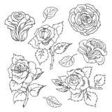 Schizzo disegnato a mano di vettore dell'illustrazione rosa del fiore su fondo bianco royalty illustrazione gratis