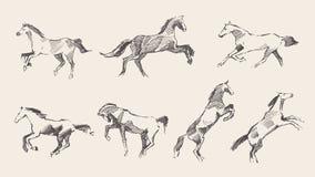 Schizzo disegnato a mano stabilito dell'illustrazione di vettore dei cavalli Fotografia Stock