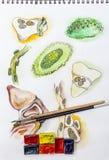Schizzo e spazzole dell'acquerello Immagini Stock Libere da Diritti