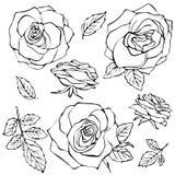 Schizzo Rose Flower Set Fotografia Stock