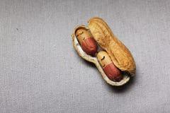 Schläfrige Erdnüsse Lizenzfreies Stockfoto