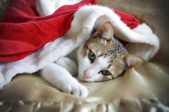 Schläfrige Katze Lizenzfreies Stockbild