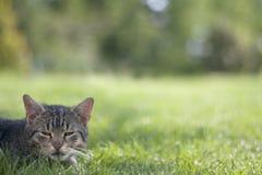 Schläfrige Katze Stockfotos