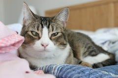 Schläfrige Katze Lizenzfreie Stockbilder