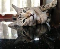 Schläfrige Katze Stockfoto