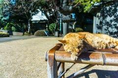 Schläfrige Katze auf dem Wagen im Mittag Lizenzfreie Stockfotos