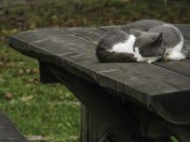 Schläfrige Katze auf Holztisch im Freien Lizenzfreie Stockfotos
