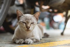 Schläfrige Katze des Porträts Stockbilder