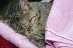 Schläfrige Katze des Tigers Lizenzfreie Stockfotos