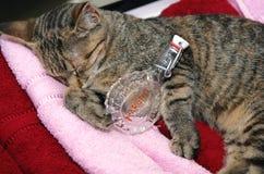 Schläfrige Katze des Tigers Lizenzfreie Stockbilder