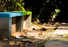 Schläfrige Katze, die im Park nahe bei einer Bank stillsteht stockfotografie