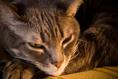 Schläfrige Katze durch Kamin Stockfoto