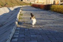schl?frige Katze im Park lizenzfreie stockfotos
