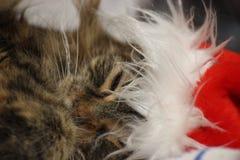 Schläfrige Katze im roten Hut für fröhliche chrismas und guten Rutsch ins Neue Jahr 2019 Weihnachtsmann-Hauptwaschbär lizenzfreie stockfotografie