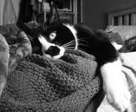 Schläfrige Katze wach Stockbild