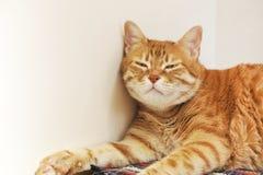 Schläfrige rote Katze Stockbild