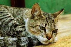 Schläfrige stillstehende Katze, reizendes Kätzchen lizenzfreies stockbild