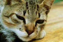 Schläfrige stillstehende Katze, reizendes Kätzchen Stockfoto