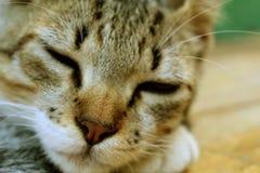 Schläfrige stillstehende Katze, reizendes Kätzchen Lizenzfreie Stockfotos