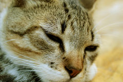 Schläfrige stillstehende Katze, reizendes Kätzchen Lizenzfreies Stockfoto