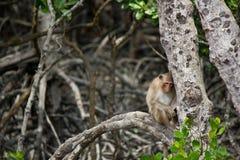 Schläfriger Affe, der auf einem Baum sich lehnt Lizenzfreie Stockbilder