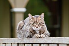 Schläfriger brauner Tabby auf Zaun Lizenzfreies Stockfoto