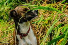 Schläfriger Hund Stockfotos