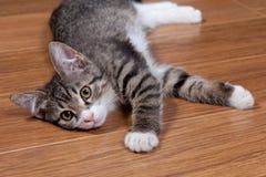 Schläfriges Kätzchen Stockbild