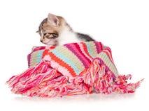 Schläfriges Kätzchen Lizenzfreies Stockfoto