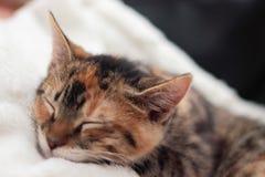 Schläfriges Kätzchen Lizenzfreie Stockbilder