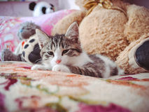 Schläfriges Kätzchen Lizenzfreie Stockfotos