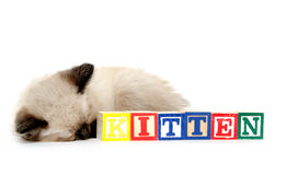 Schläfriges Kätzchen und Blöcke Lizenzfreies Stockfoto