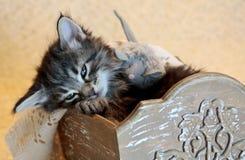 Schläfriges kleines norwegisches Waldkatzenkätzchen lizenzfreies stockfoto