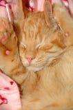 Schläfriges süßes Kätzchen Stockfotografie