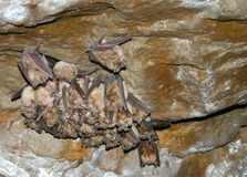 Schlägt Kolonie in eine Höhle Lizenzfreie Stockbilder