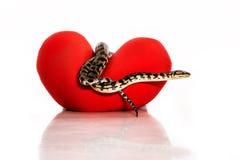Schlängeln Sie sich, ein rotes Herz auf einem weißen Hintergrund umarmend Lizenzfreies Stockbild