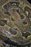 Schlängeln Sie sich Pythonschlange lizenzfreies stockfoto