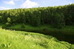Schlängelnder Fluss mitten in einem Wald am sonnigen Tag Lizenzfreies Stockfoto