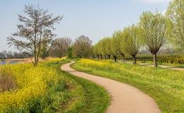 Schlängelnder Weg im Frühjahr stockfoto