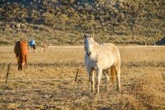 Schläuche stehen im Bauernhof mit Gebirgshintergrund an spät des Tages in der Landschaft still Lizenzfreie Stockfotografie