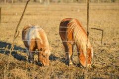 Schläuche stehen im Bauernhof mit Gebirgshintergrund an spät des Tages in der Landschaft still Lizenzfreies Stockfoto