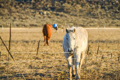 Schläuche stehen im Bauernhof mit Gebirgshintergrund an spät des Tages in der Landschaft still Stockfoto