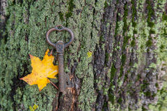 Schlüssel mit Herbst sitem, das auf dem Moos auf der Barke liegt Stockfotos