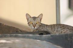Schl?frige Katze lizenzfreie stockfotografie